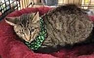 adopt anson the cat