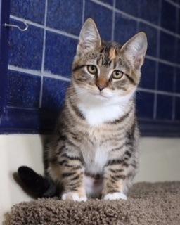 Adopt Feist the cat