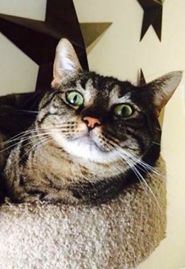 adopt marley the cat
