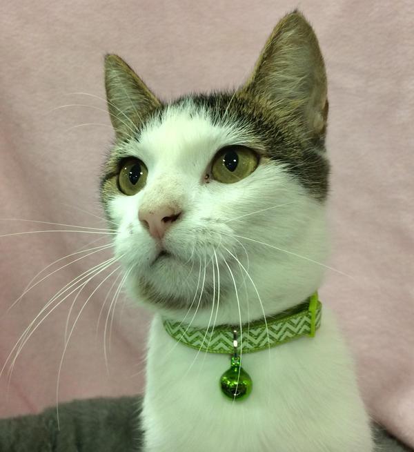 Adopt Melva the cat