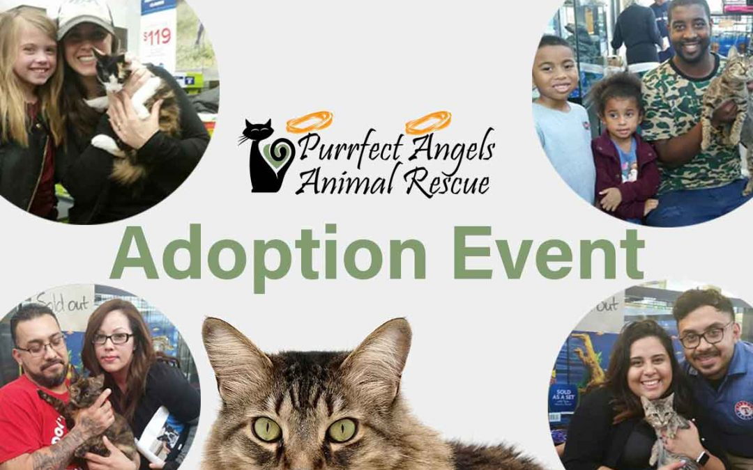 March 25th Adoption Event