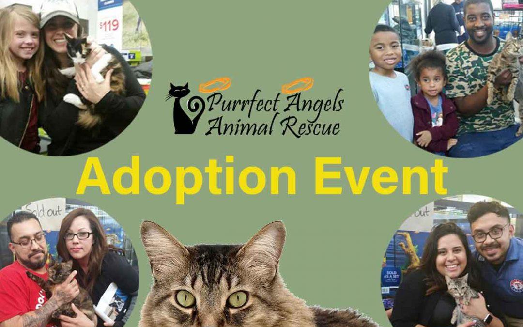 December 23rd Pet Adoption Events