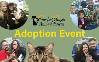 December 23rd Pet Adoption Events