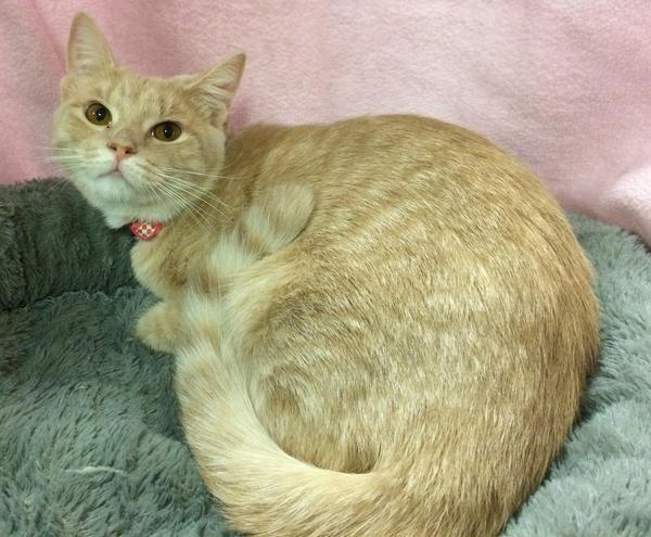 adopt cat susie q