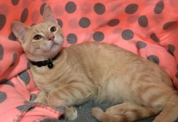 adopt vincent the cat