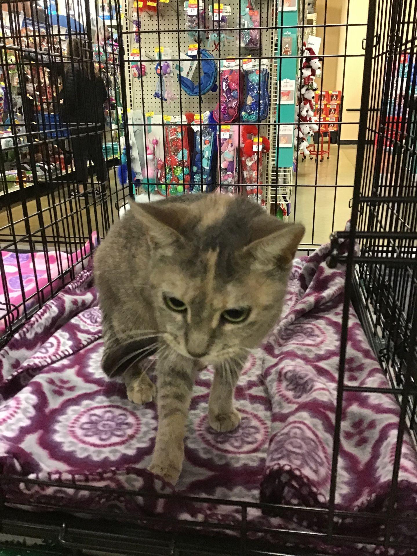 adopt maureen the cat